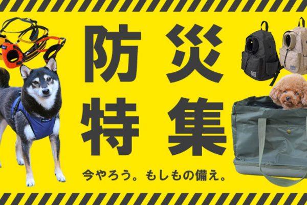 【ペットの防災特集】災害時の避難所生活を想定したペットのしつけと健康管理