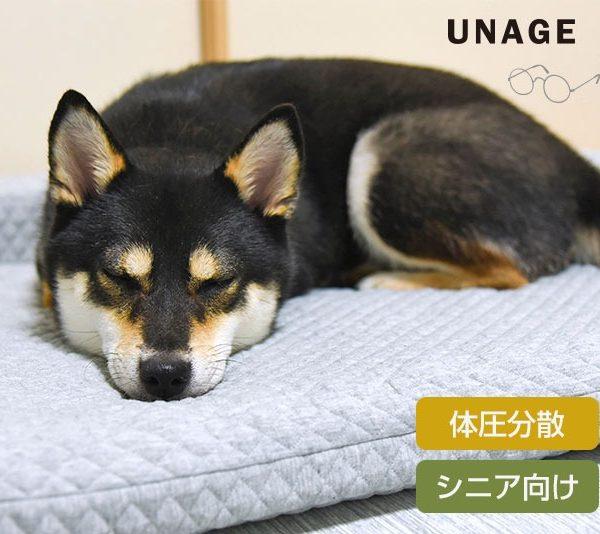 【ペットの介護】耐圧を分散する二重構造のシニアベッド