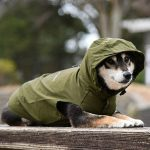 レインコートの柴犬