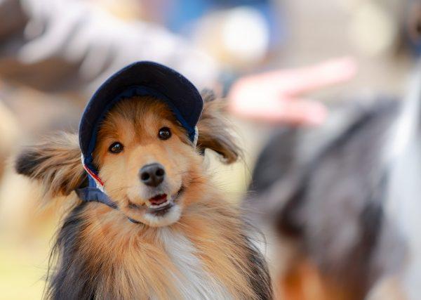 犬のカメラ目線をゲット!SNS映えするとっておきの写真を撮ろう