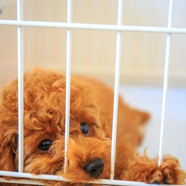 エアコンをつけた室内で熱中症?犬の留守番・熱中症対策の注意点