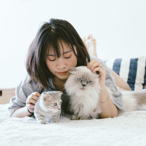 猫同士の相性を見極める期間はどれくらい?多頭飼いする前に知るべき3つ注意点