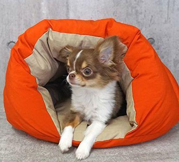 ハロウィンカラーのベッドに入る犬