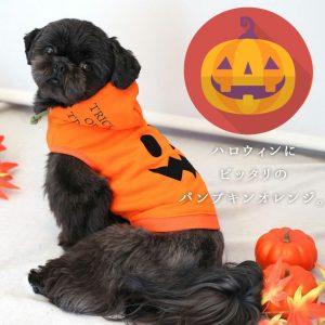 ハロウィンの服を着る犬