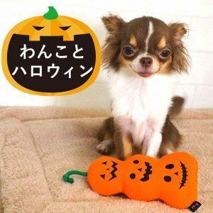 ハロウィンのおもちゃと犬