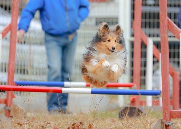 スポーツの秋を愛犬と満喫!ドッグスポーツに挑戦してみよう