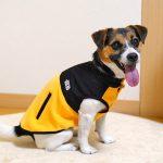 撥水・防汚加工でペットを雨や汚れから守る犬の服【SHIELD COAT】