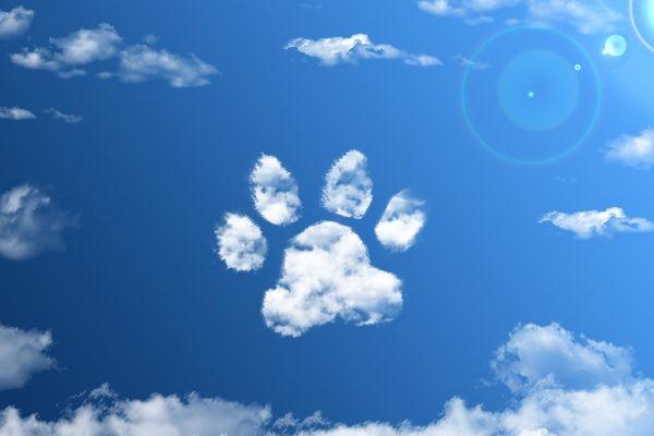 11月1日はワンワンワンで犬の日!愛犬に愛情と感謝を伝える20の方法
