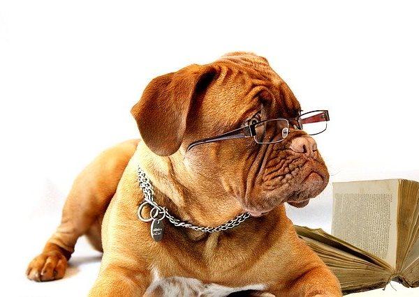 【老犬老猫ケア】高齢犬猫に見られる老化のサイン